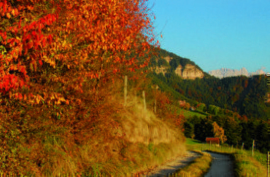 golden-autumn-south-tyrol-03